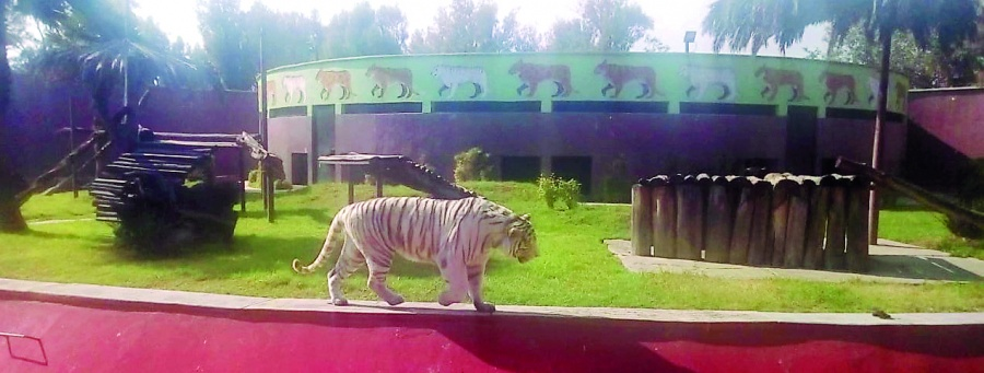 Zoológico de Aragón: suben a 70 los animales muertos