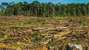 Más de 11 mil árboles de la selva serán el costo del Tren Maya