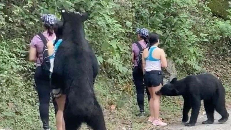 Oso negro será trasladado a zoológico de la AZCARM