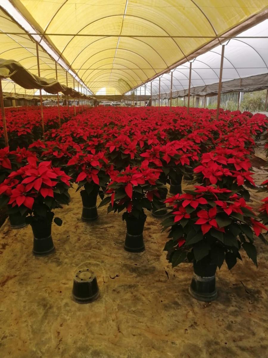 Buscan sobrevivir floricultores de Xochimilco