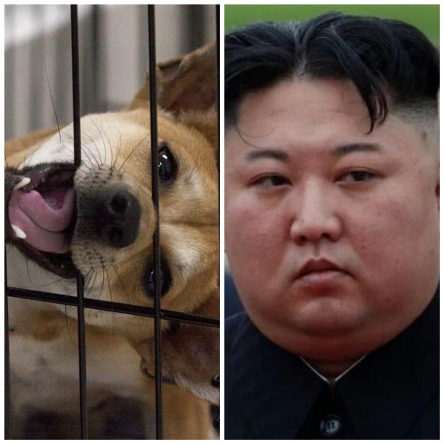 """Ya no habrá perritos como mascotas en Corea del Norte: """"Son un lujo burgués"""""""