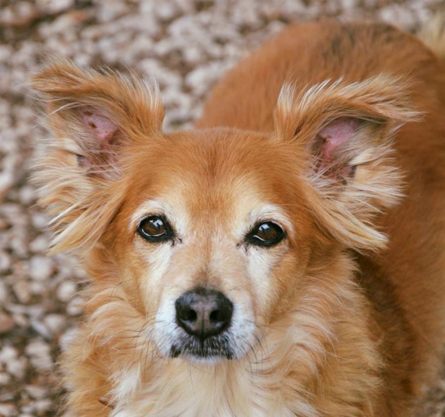 Sader desarrolla app para registrar animales con Covid-19