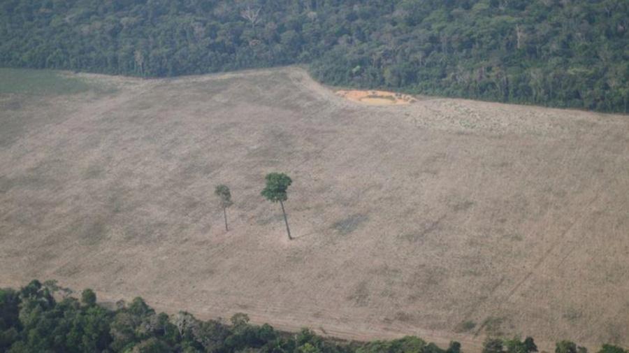 Acciones contra tala ilegal del Amazonas serán detenidas