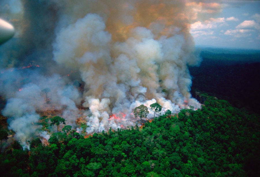 Bomberos argentinos apoyarán para controlar incendio de selva amazónica