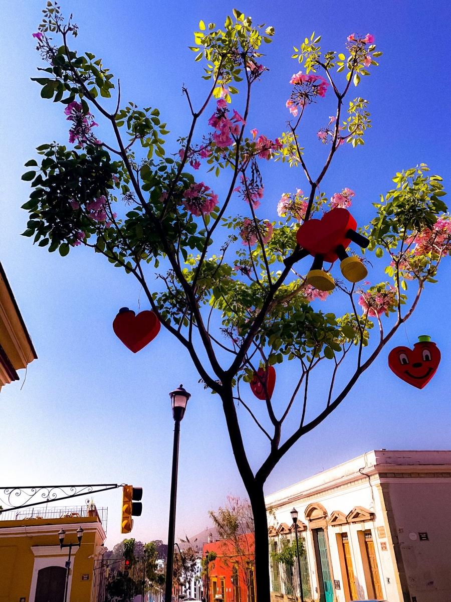 ¿Qué opinas del Día del Amor y la Amistad?