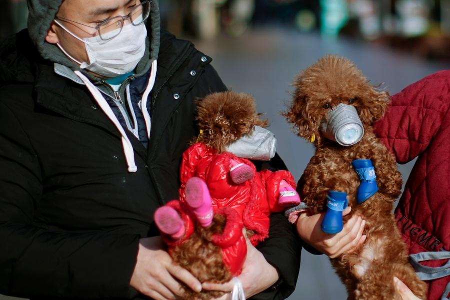 Coronavirus: Perrito en cuarentena