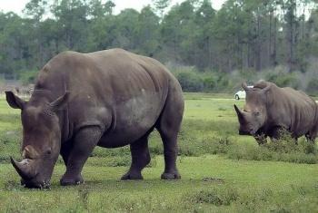 Se vive la sexta extinción masiva y al menos 515 especies de vertebrados están en amenaza de muerte
