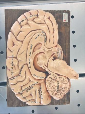 El misterio de los cerebros creativos