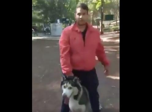 En el Parque Hundido, perro Husky siberiano mata a Pomerania