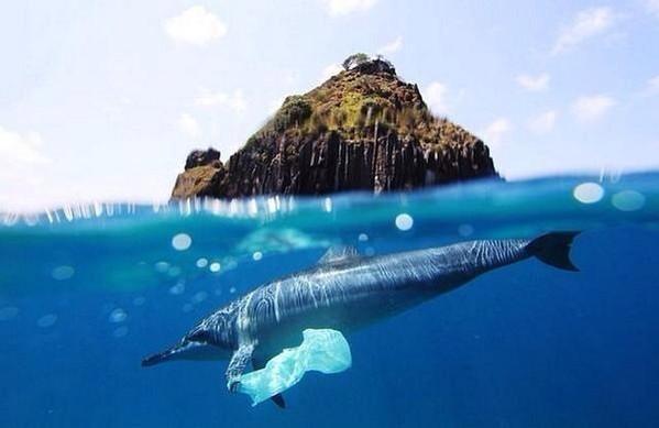 Toneladas de residuos de plástico han sido arrojadas a océanos en las últimas décadas