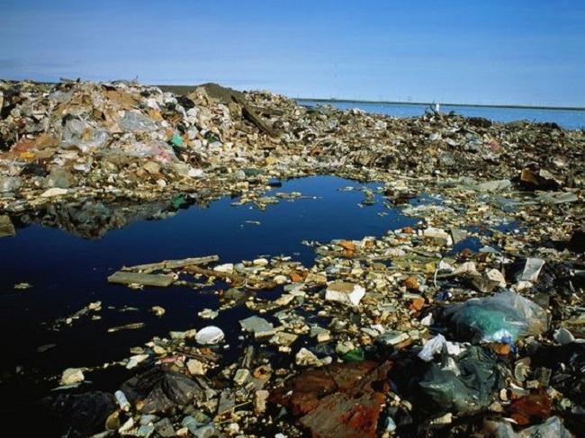 """""""Islas de plástico"""" matan a miles de animales al año"""