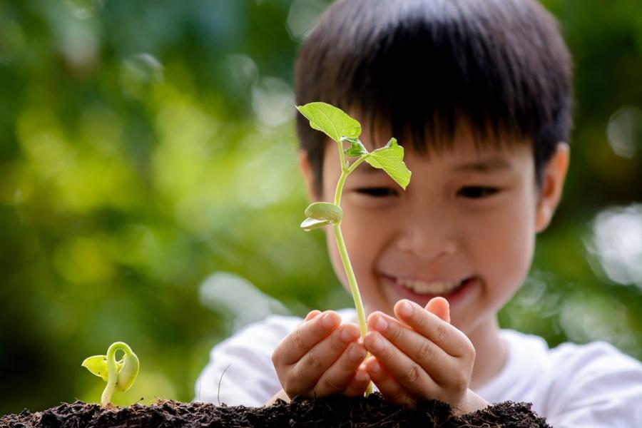 En Bélgica planean para el 2020 plantar un árbol por cada recién nacido