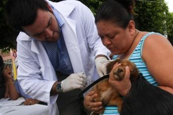 Mañana inicia campaña de vacunación a mascotas en Milpa Alta