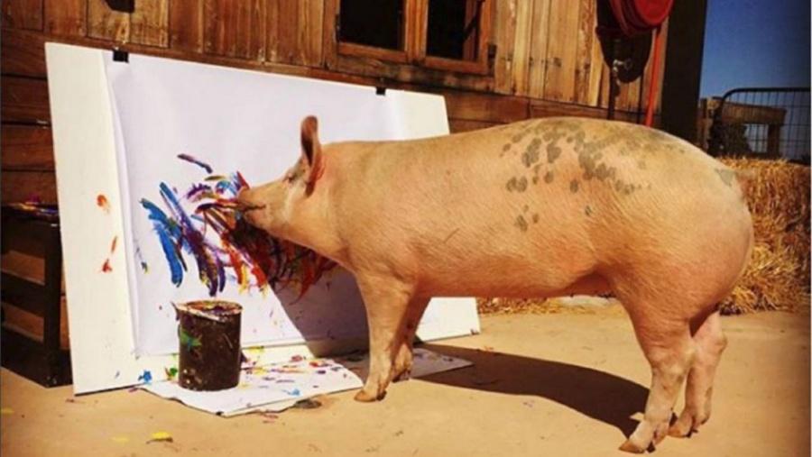 La cerda 'Pigcasso' pinta y vende cuadros por mil euros