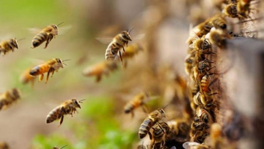 UNAM y bomberos unen fuerzas para la conservación de abejas