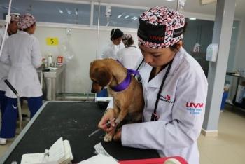 Inauguran el primer banco de sangre animal en México