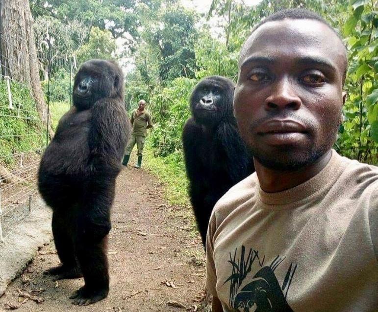 """La razón detrás del comportamiento de las gorilas que posan para """"selfie"""""""
