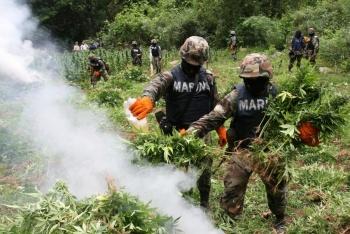 Destruye Marina plantío de marihuana en Sinaloa