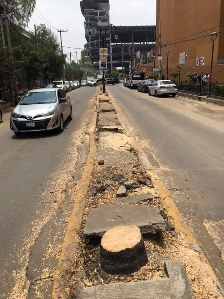 Resultado de imagen para Condena Diputado tala ilegal de 60 árboles en camellón de Coyoacán