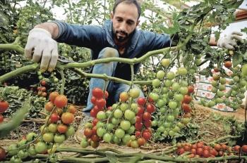 EU impone arancel a jitomate mexicano