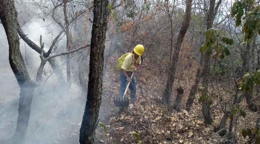 Sofocan incendio forestal en Chilpancingo