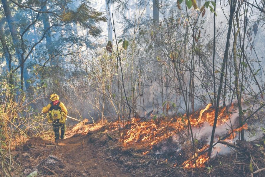 Pese a alertas por incendios, Conafor sufre recorte de 60%