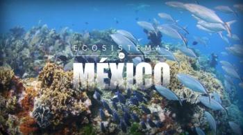 Canal Once lanza series en pro de la naturaleza en México