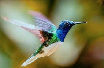 Diseñan dron con habilidades de un colibrí para rescatar personas