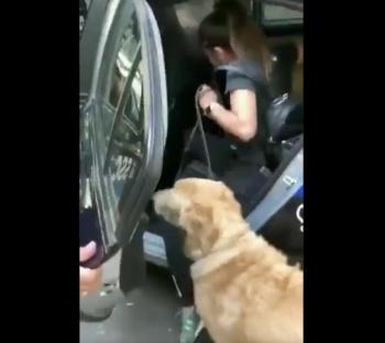 Policías detienen a perros por jugar en una fuente de la Cuauhtémoc