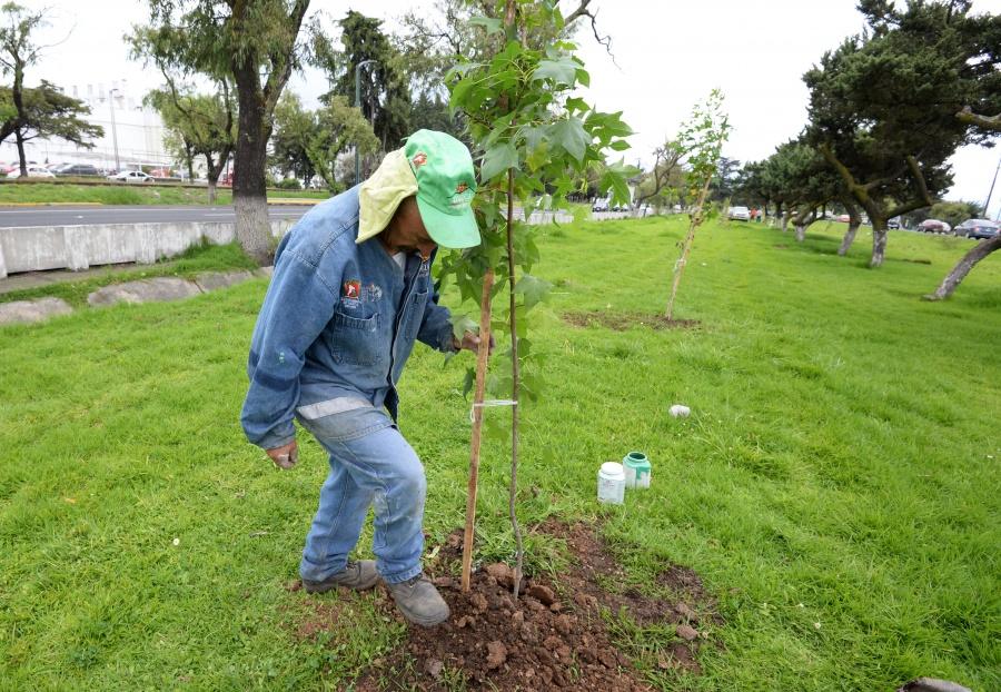 Sembrarán 10 millones de árboles en CDMX para aminorar contingencias