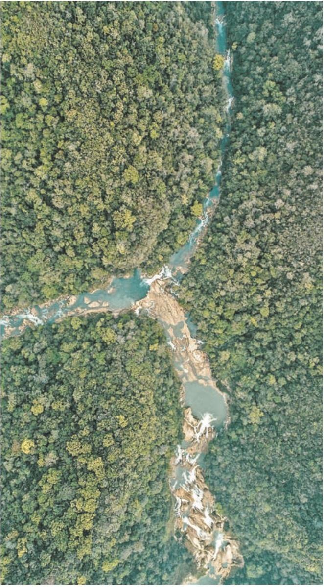 Capturan deforestación de Selva Lacandona