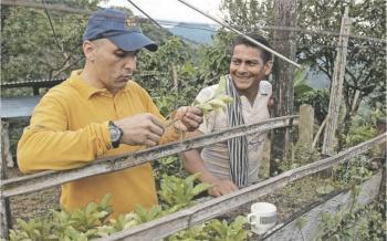 Subisidian a caficultores con 5 mil pesos para combatir crisis