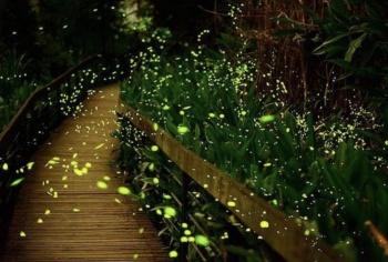 Prevé Tlaxcala 48 mdp por temporada de avistamiento de luciérnagas