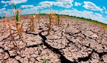 Microorganismos, vitales para combatir el cambio climático