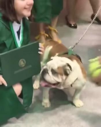 Bulldog muerde diploma de recién graduada