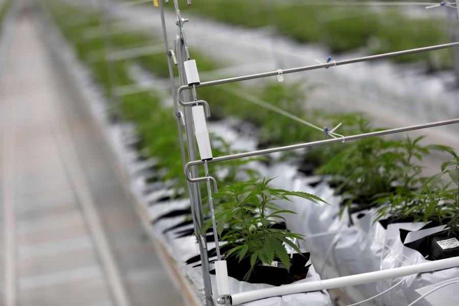 En Nueva York despenalizan consumo y posesión de marihuana