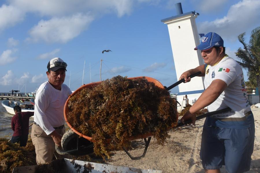 Alerta UNAM que el sargazo pone en riesgo el mar Caribe