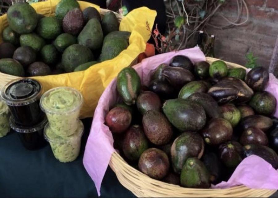 ¡Sin aguacate, por favor!, el fruto podría alcanzar los 130 pesos por kilo