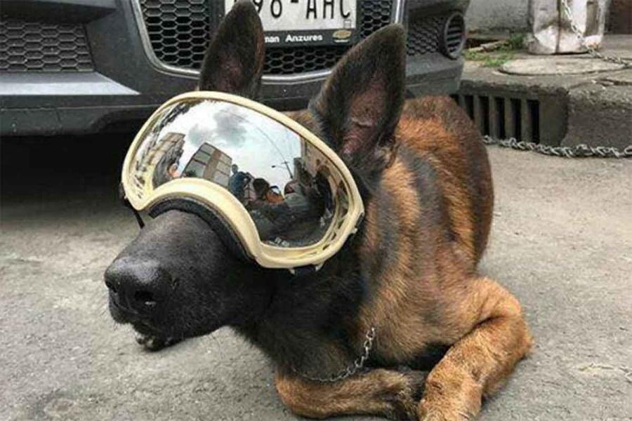 Chichí, perro rescatista del 19S, ahora necesita tu ayuda