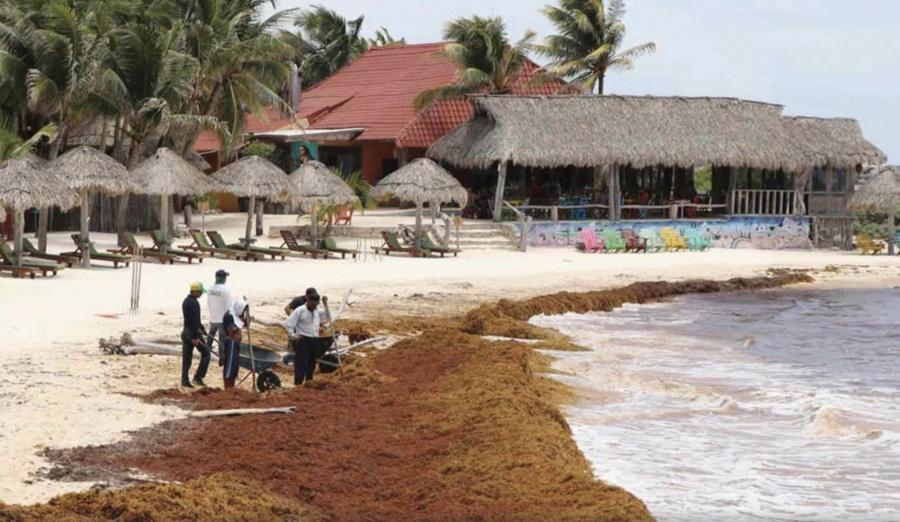 Sargazo arriba a playas de Veracruz