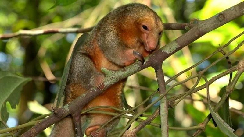 Descubren al menos 36 nuevas especies en el Amazonas
