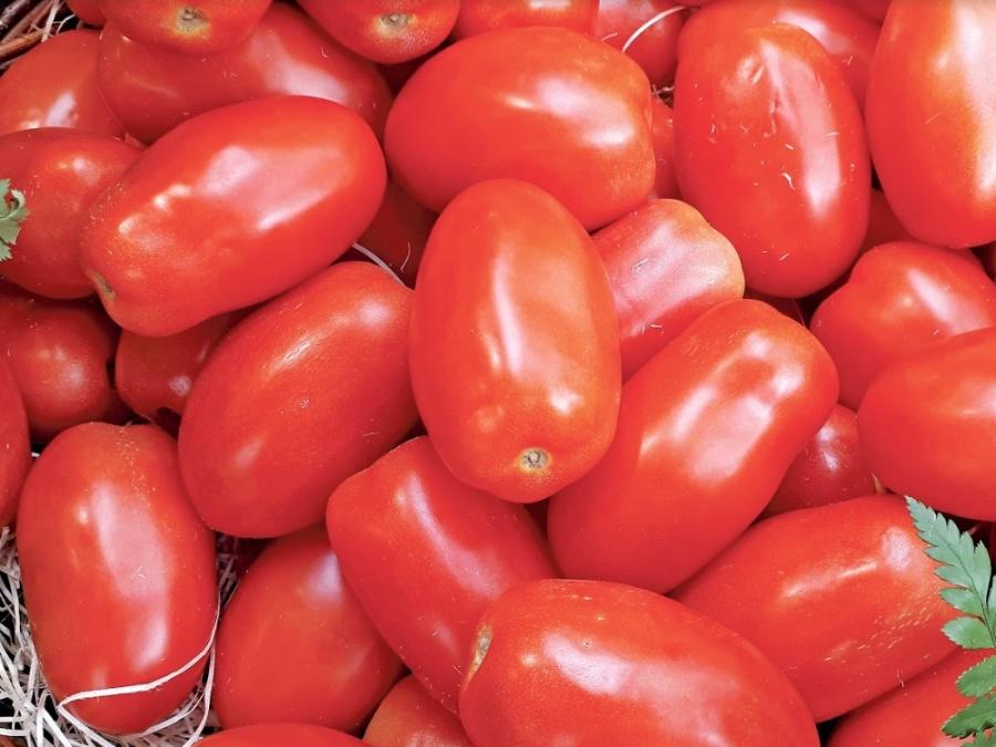 Daños por 350 mdd a tomateros por arancel