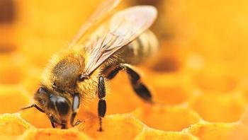 Alarma en Rusia por muerte masiva de abejas