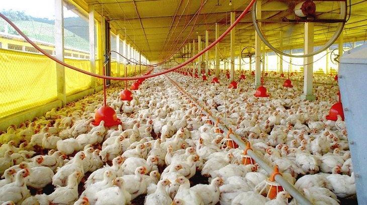 Suspende Hong Kong importaciones de carne aviar de Guanajuato