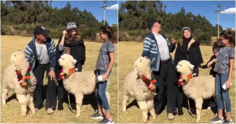 Una alpaca le escupe a Sergio Mayer en sus vacaciones en Perú