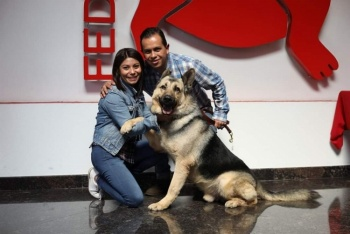 Adopta a uno de los 28 héroes caninos que serán jubilados