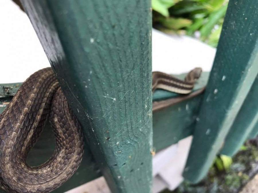 Tormenta tropical 'Barry' provoca la aparición de serpientes en EU