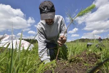 Conafor lanza programa para proteger bosques