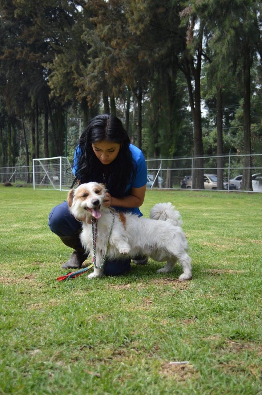 """No se te olvide felicitar a """"firulais"""", hoy se celebra el Día Mundial del Perro"""