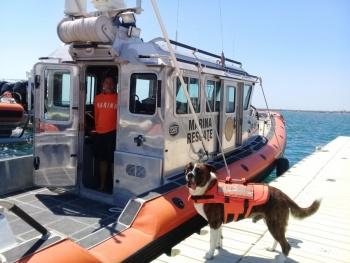 Reconoce la Marina labor de los caninos navales